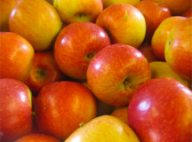 Apple Trees From U.S. Under Quarantine in Canada