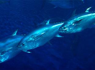 Monterey Bay Aquarium's Sustainable Foods Institute