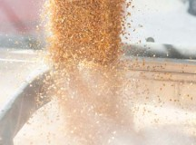 AgGateway focuses on grain traceability for FSMA standards