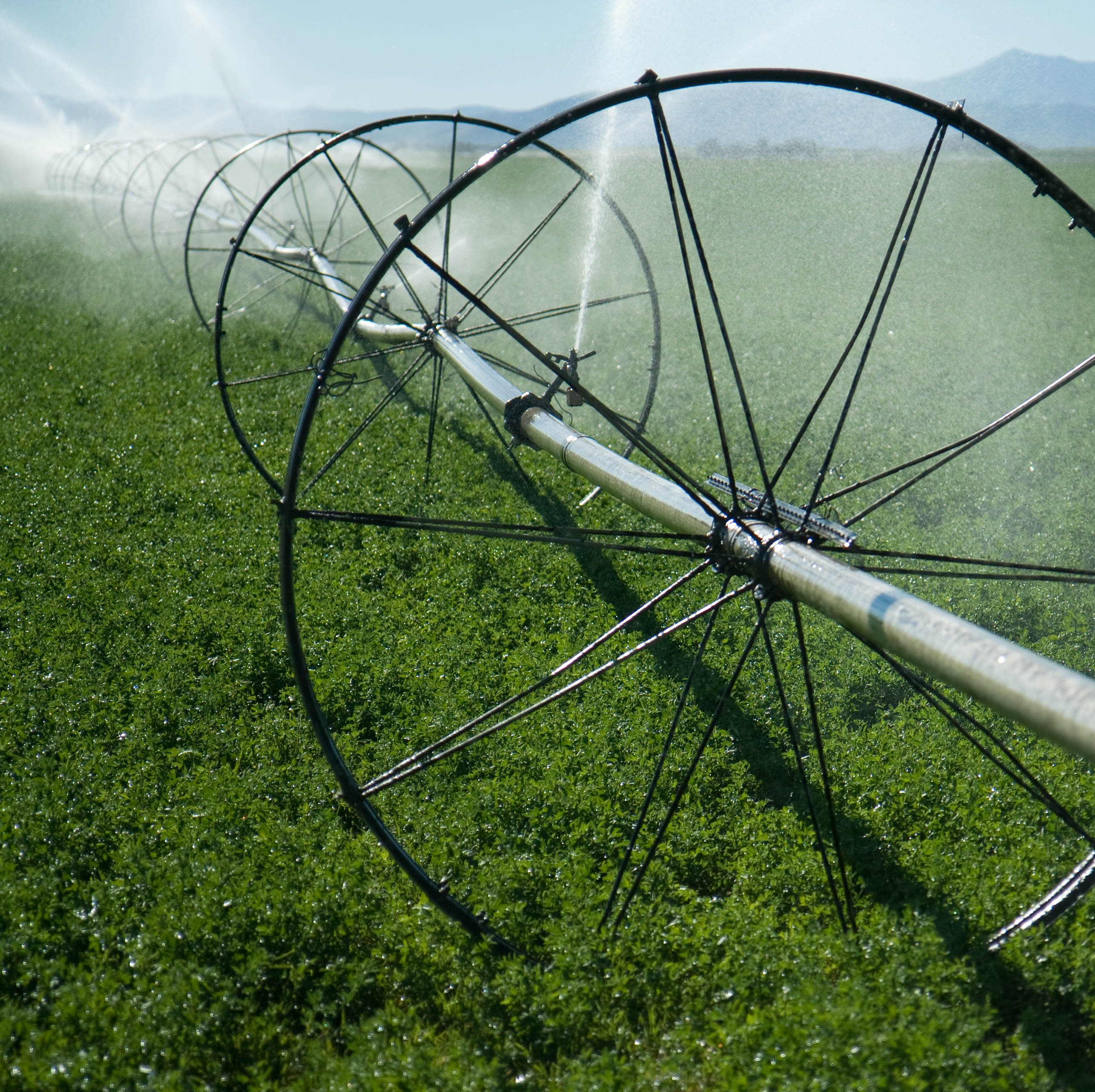 Irrigation_web