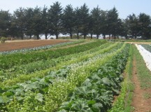 FSMA: Right Around the Corner for Large Growers